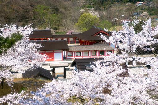 見返り坂から望む桜と政庁